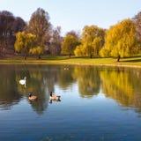 W parku jezioro. Obrazy Royalty Free