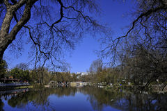 W parku nagi drzewo Zdjęcia Royalty Free