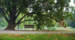 W parku panoramy ławka drzewo i Obrazy Royalty Free