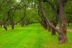 W parku piękna aleja Obraz Royalty Free