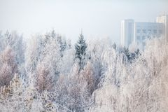 W parku pierwszy śnieg Styczeń 33c krajobrazu Rosji zima ural temperatury Fotografia Royalty Free