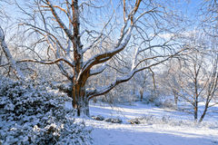 W parku pierwszy śnieg. Fotografia Stock