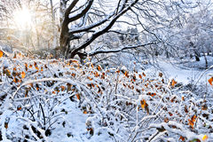 W parku pierwszy śnieg. Zdjęcie Stock