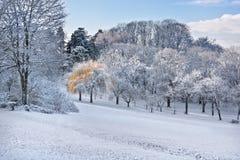 W parku pierwszy śnieg. Obraz Royalty Free