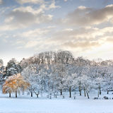 W parku pierwszy śnieg. Zdjęcia Stock