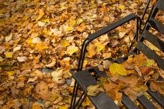 W parku spadać liść Zdjęcia Royalty Free