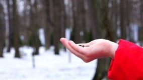 W parku, zima ptaki jedzą ziarna od ręk dziewczyn zdjęcie wideo