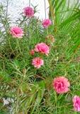 W pełnym kwiacie fotografia royalty free