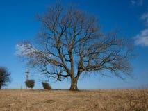 w połowie dzień drzewo Obrazy Royalty Free