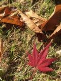 W połowie jesieni pamięć fotografia stock