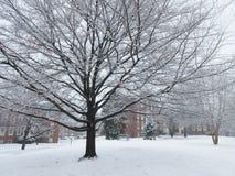 W połowie Luty śnieg w zimie Zdjęcie Stock
