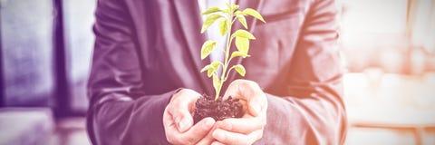 W połowie sekcja biznesmena mienia roślina fotografia stock