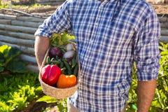 W połowie sekcja trzyma kosz świezi warzywa mężczyzna Zdjęcia Royalty Free