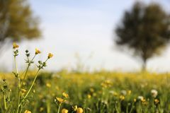 W polu dzicy kwiaty zdjęcie royalty free