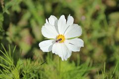 W poszukiwaniu nektaru obrazy stock