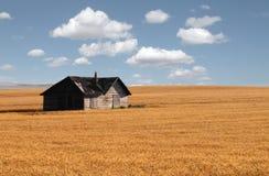 W preryjnym pszenicznym polu zaniechany dom. Zdjęcia Royalty Free