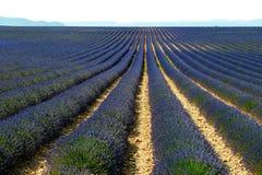 W Provence lawendy pole Zdjęcie Royalty Free