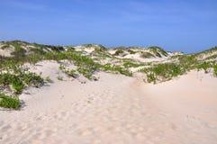 W Przylądku piasek Diuna Hatteras, Pólnocna Karolina Obraz Stock