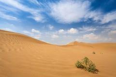 W pustyni krzak rośliny Obrazy Royalty Free