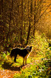 wśród psich rozjarzonych drzew Zdjęcie Stock