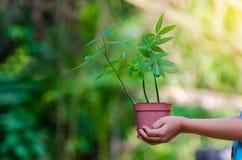 W rękach drzewa r rozsady Bokeh zielenieje tło ręki mienia Żeńskiego drzewa na natury pola trawy lasu konserwaci Obrazy Royalty Free