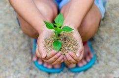 W rękach drzewa r rozsady Bokeh zielenieje tło ręki mienia Żeńskiego drzewa na natury pola trawy lasu konserwaci Zdjęcia Royalty Free