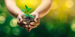 W rękach drzewa r rozsady Bokeh zielenieje tło ręki mienia Żeńskiego drzewa na natury pola trawy lasu konserwaci Fotografia Royalty Free