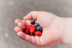 W ręce dziecka jagod czarne jagody i truskawki zdjęcia royalty free
