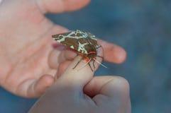W rękach dziecko motyl Fotografia Royalty Free