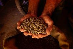 W rękach kawowe fasole Fotografia Stock