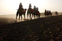 W ranek, camles w desrt Fotografia Stock