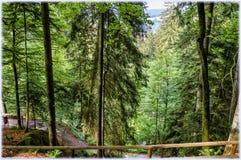 Wśrodku Schwarzwald Czarnego lasu fotografia stock