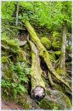 Wśrodku Schwarzwald Czarnego lasu zdjęcie royalty free