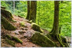 Wśrodku Schwarzwald Czarnego lasu obrazy royalty free