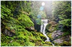 Wśrodku Schwarzwald Czarnego lasu zdjęcie stock