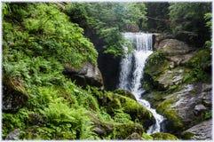 Wśrodku Schwarzwald Czarnego lasu obraz stock