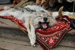 W Rosjanina rynku skóra wilczy dywanik zdjęcia stock