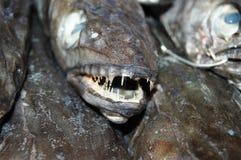W rybim sklepie Fotografia Royalty Free