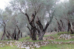 W sławnym Olivewood Montenegro, Ulcinj (, zima) obraz royalty free