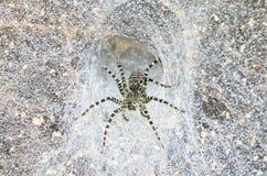 W sieci tulejowy pająk obrazy stock