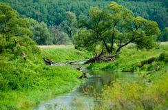 Wąska rzeka w Rosja fotografia royalty free