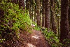 Wąski footpath w lesie Obrazy Stock