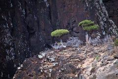 W Socotra górach smoków drzewa Zdjęcie Royalty Free