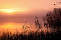 W spokojnym ranek mgłowa drewniana jeziorna jesień, Obrazy Stock