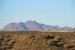 W?stenlandschaften mit Bergen im S?den von Namibia und von zwei diskreten gelben V?geln Die Trockenzeit lizenzfreie stockfotos