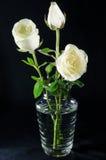 W szklanej wazie biały róże Fotografia Stock