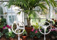 W szklarni - rośliny siedzą w okno konserwatorium z dwa wiktoriański koła korbami i widoku outside otwarte okno obrazy stock