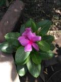 W ten sposób słodki kwiat fotografia royalty free