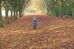 W ten sposób wiele drzewa, w ten sposób wiele liście tak daleko jak oko mogą widzieć Cambridge Październik 2015 zdjęcie stock