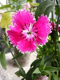W ten spos?b pi?kni kwiaty zdjęcia royalty free